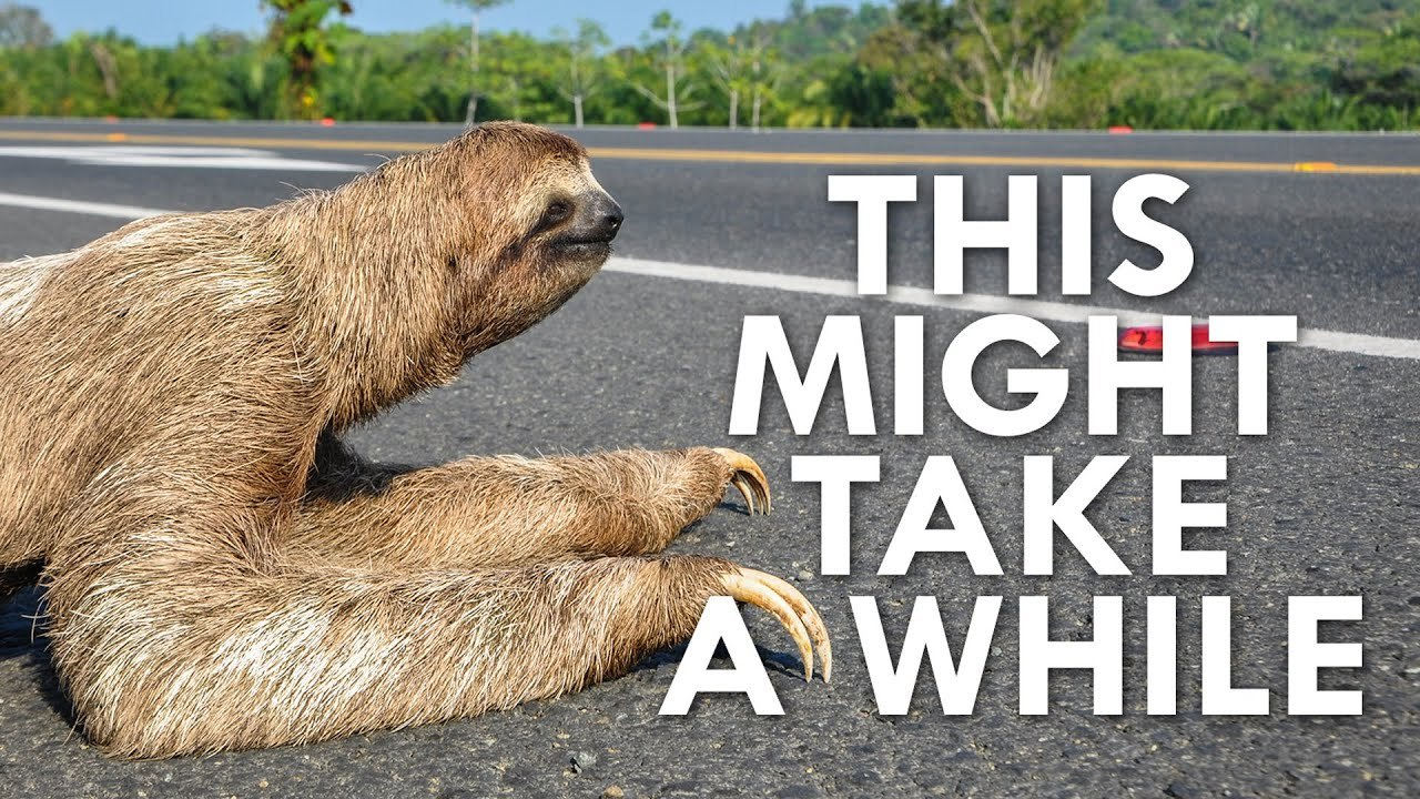 sloth crossing the road saying this might take a while