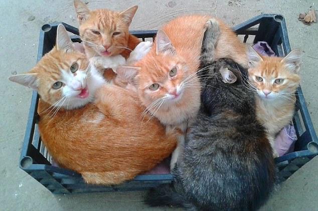 cat sharing a box