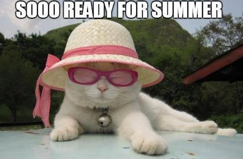 Ready for summer cat